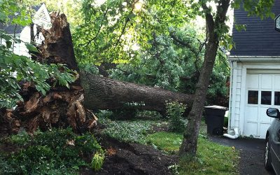 Common Danger Signs of Fallen Trees